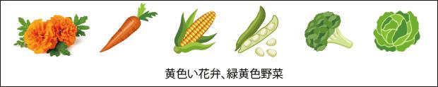 黄色い花弁、緑黄色野菜